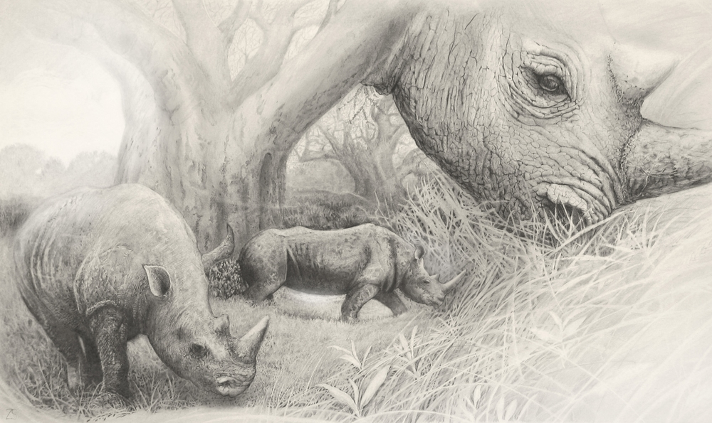 Rhino Tryptic