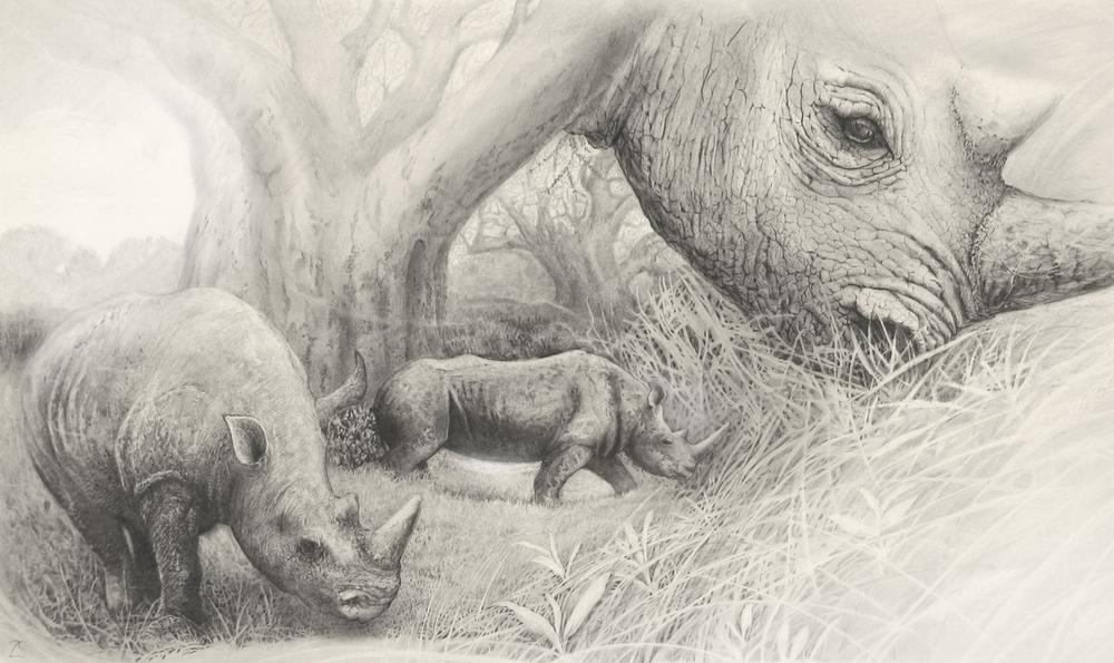 Rhino Tryptic