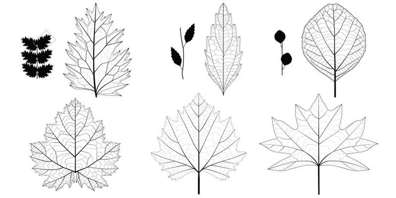 Cretaceous Leaves