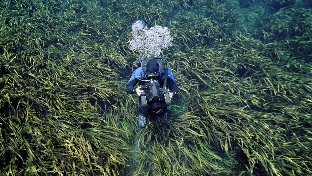 Under Water Eel Grass