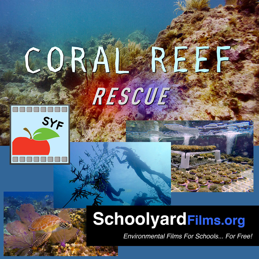 Coral Reef Rescue