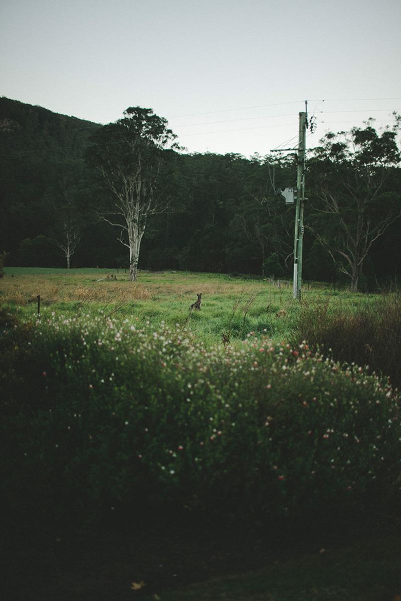 kangaroo+valley_117.jpg