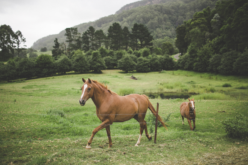 kangaroo-valley_072.jpg