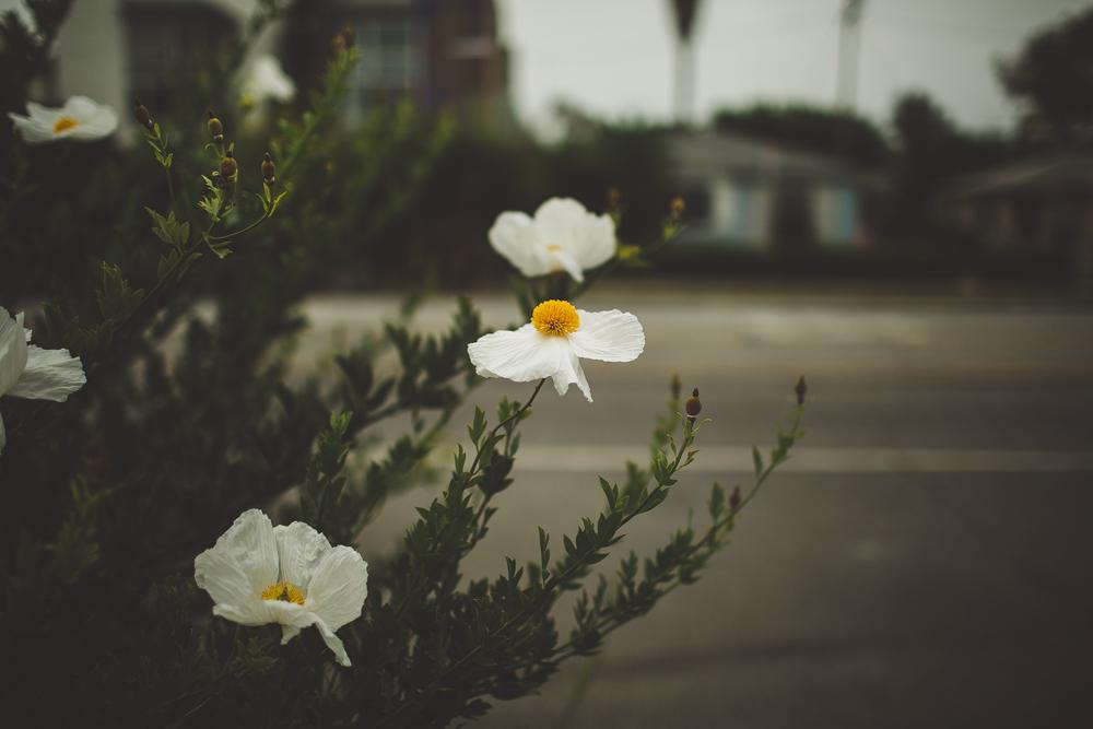 julia-trotti_LA-039.jpg