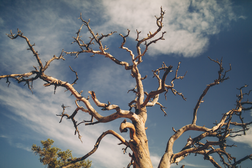 joshua-tree-julia-trotti_46.jpg
