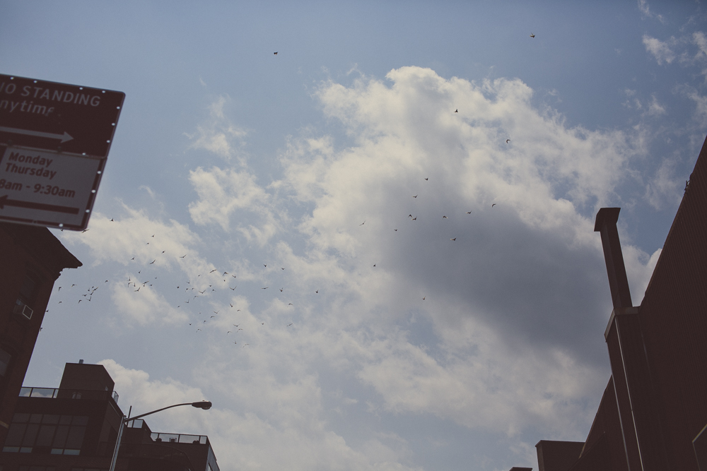 A flock of birds flying overhead while we walked through the suburbs.