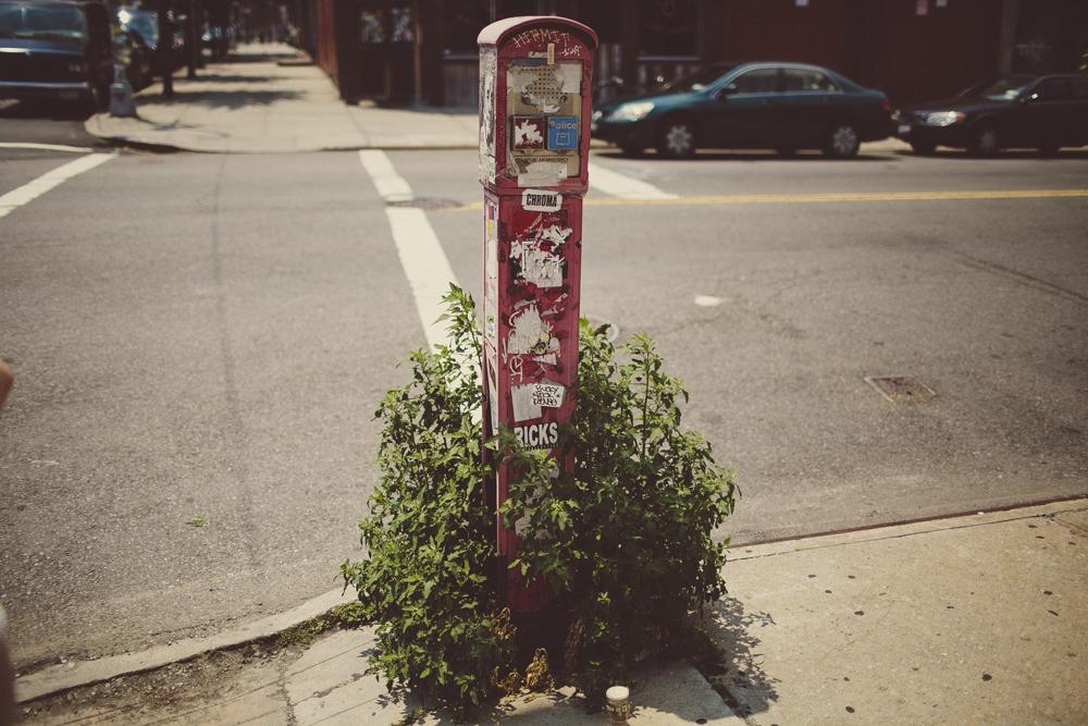 brooklyn_julia trotti_06.jpg