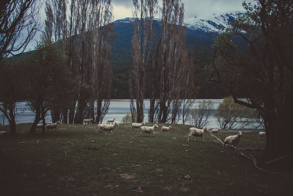 There were literally hundreds of sheep running all around us!