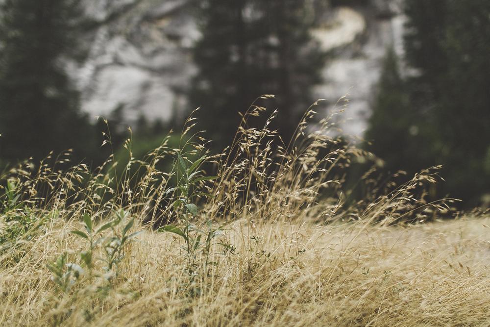 julia-trotti_yosemite_31.jpg