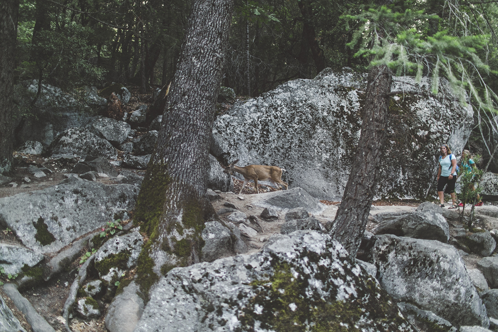 A deer walking on the hiking path.