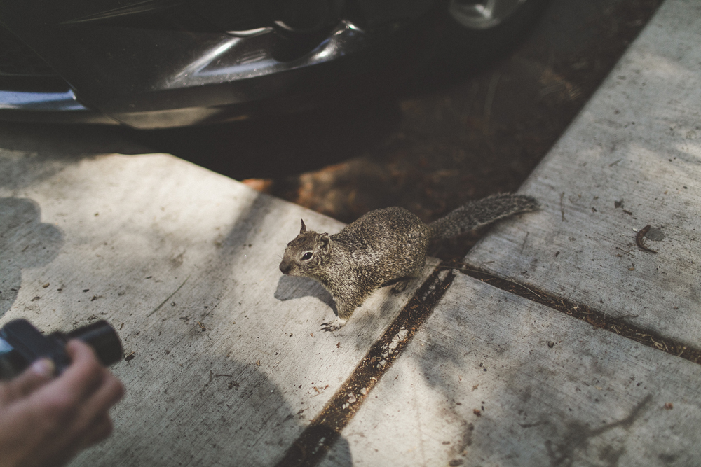 A very friendly squirrel who came up to Dan and sniffed his camera.