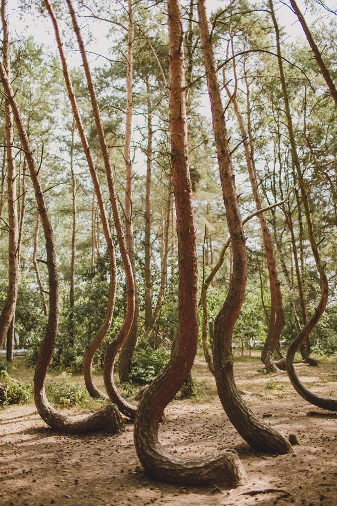 julia-trotti_crooked-forest_001.jpg