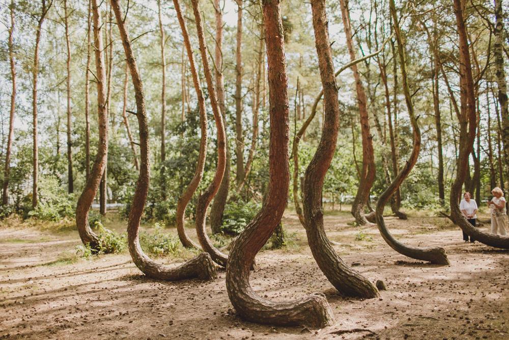 julia-trotti_crooked-forest_009.jpg