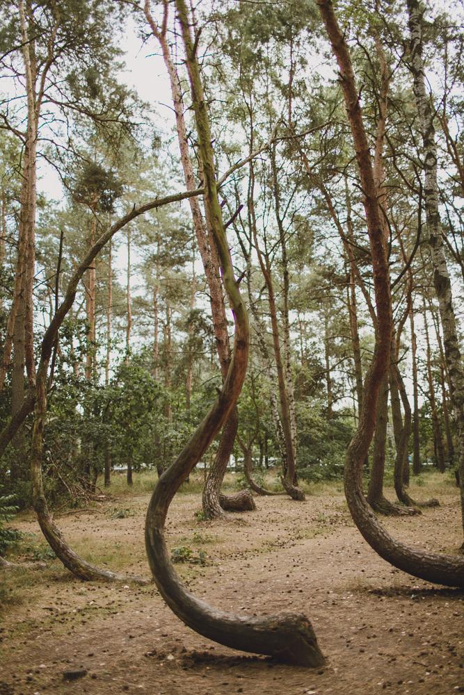 julia-trotti_crooked-forest_012.jpg