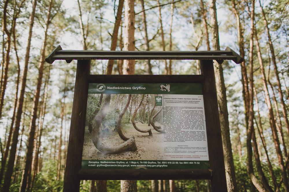 julia-trotti_crooked-forest_018.jpg