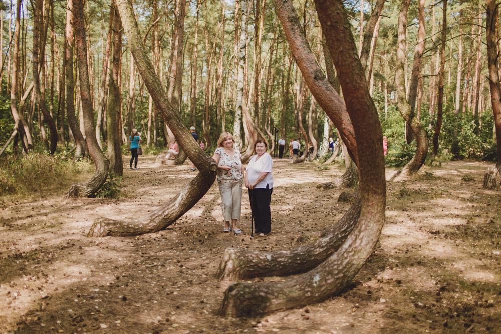 julia-trotti_crooked-forest_017.jpg