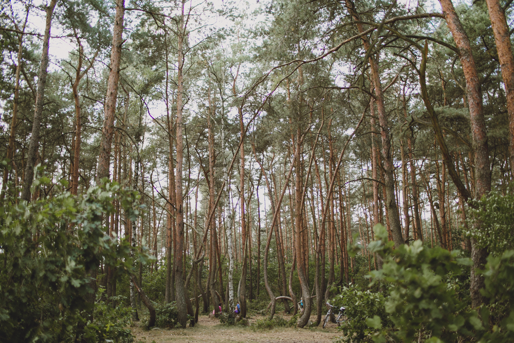 julia-trotti_crooked-forest_020.jpg