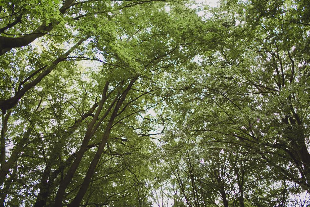 julia-trotti_crooked-forest_024.jpg