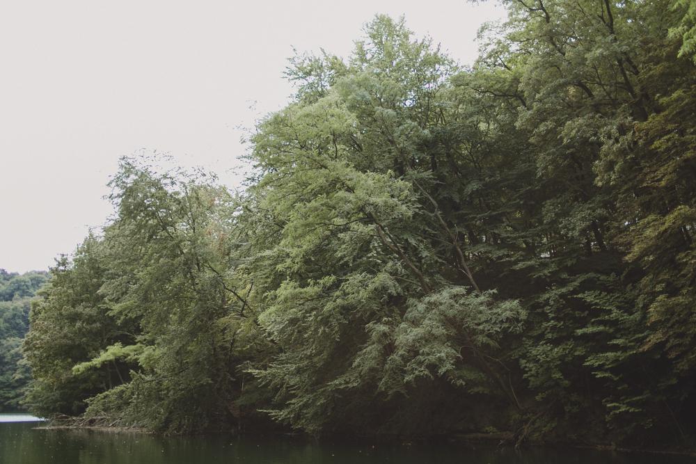 julia-trotti_crooked-forest_027.jpg