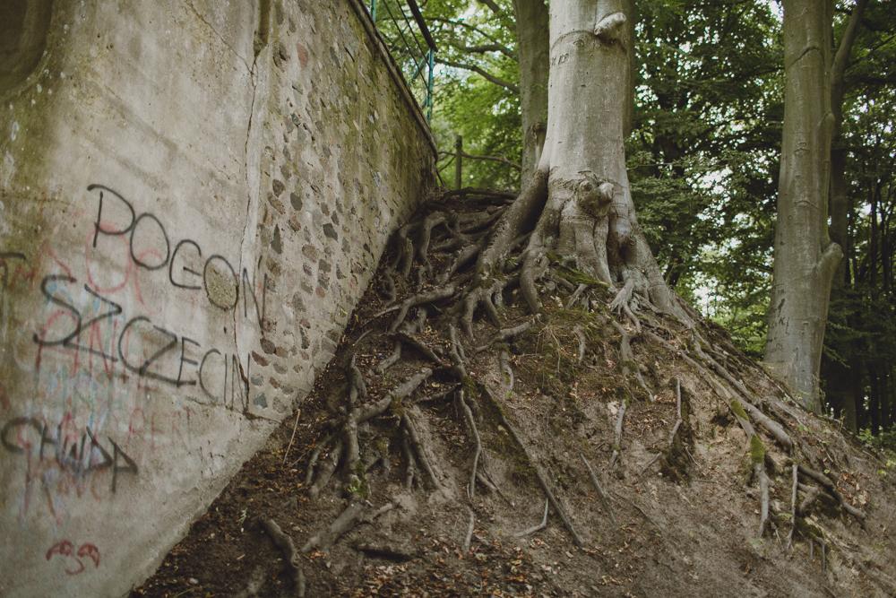 julia-trotti_crooked-forest_028.jpg