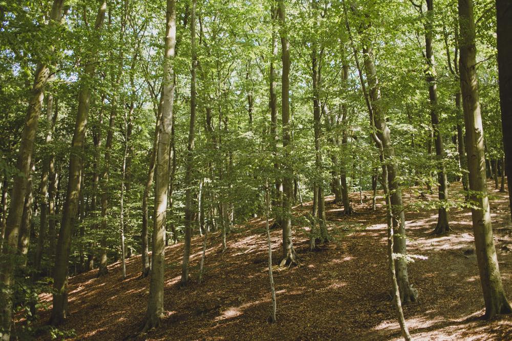 julia-trotti_crooked-forest_033.jpg