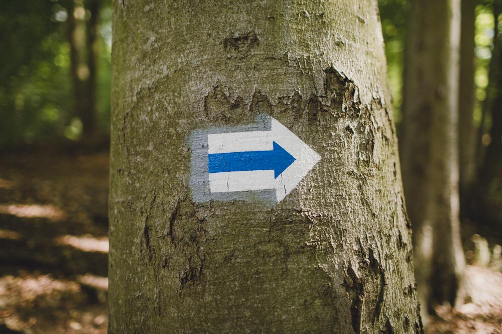 julia-trotti_crooked-forest_034.jpg
