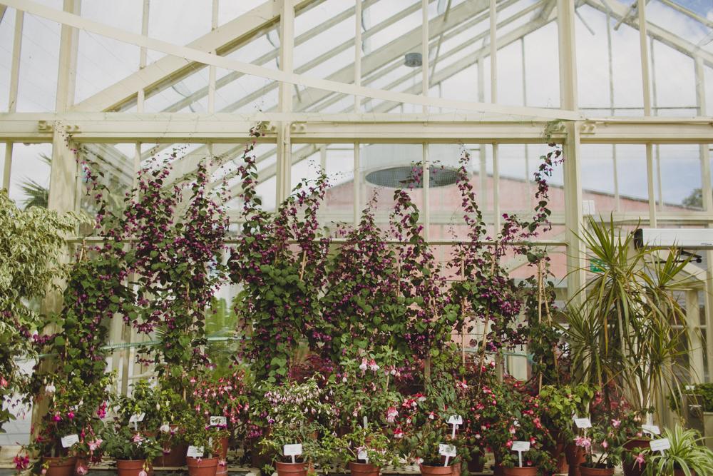 julia-trotti_dublin-botanic_010.jpg