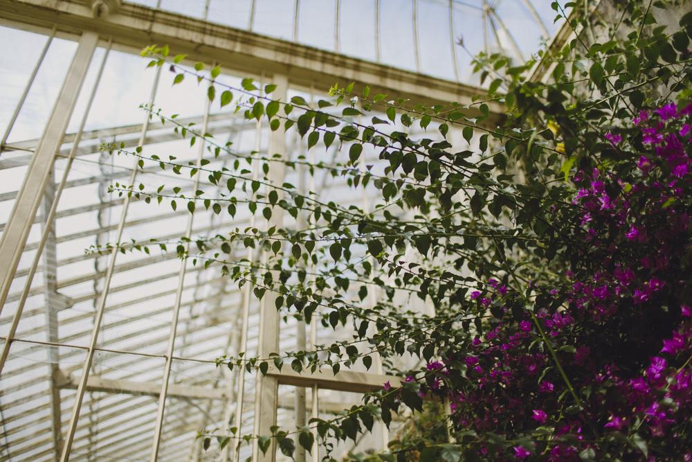 julia-trotti_dublin-botanic_013.jpg