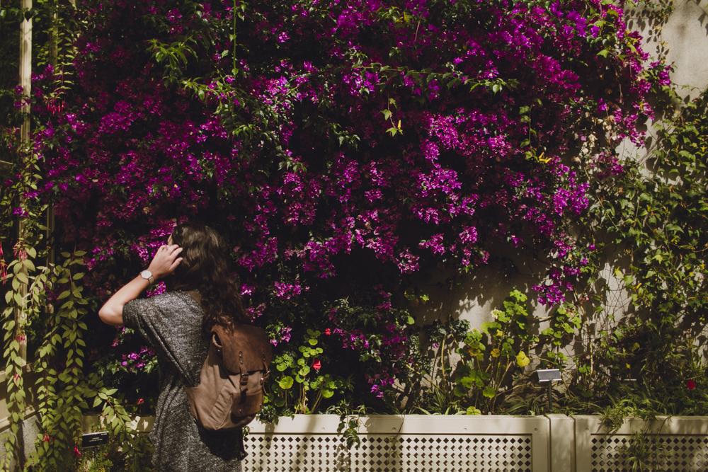 julia-trotti_dublin-botanic_012.jpg