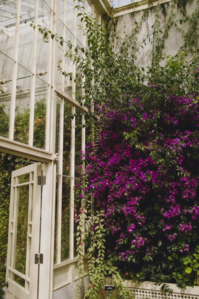 julia-trotti_dublin-botanic_021.jpg