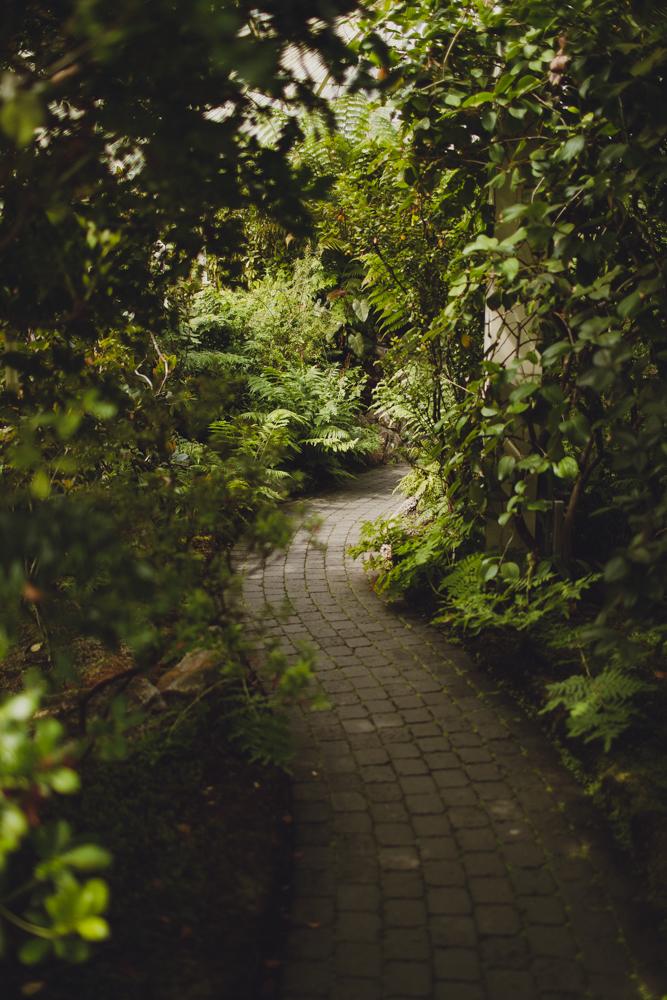 julia-trotti_dublin-botanic_024.jpg