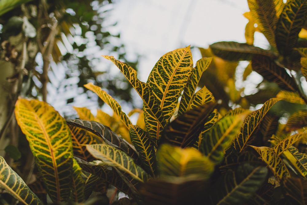 julia-trotti_dublin-botanic_028.jpg