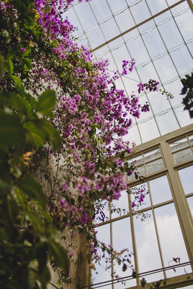 julia-trotti_dublin-botanic_029.jpg