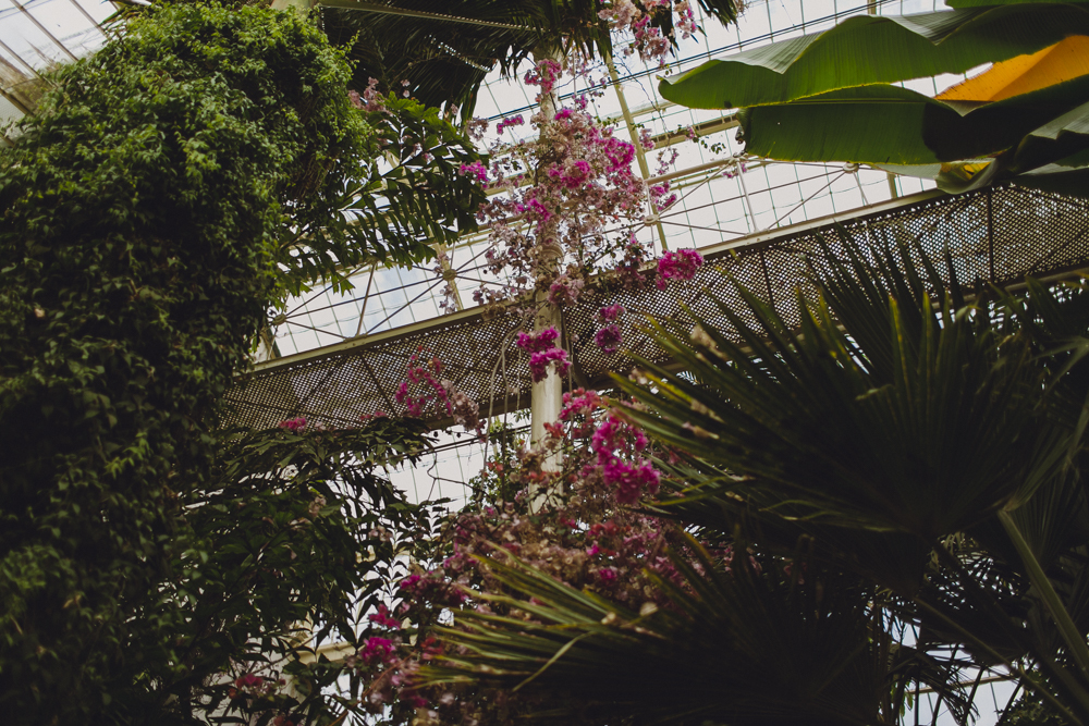 julia-trotti_dublin-botanic_031.jpg