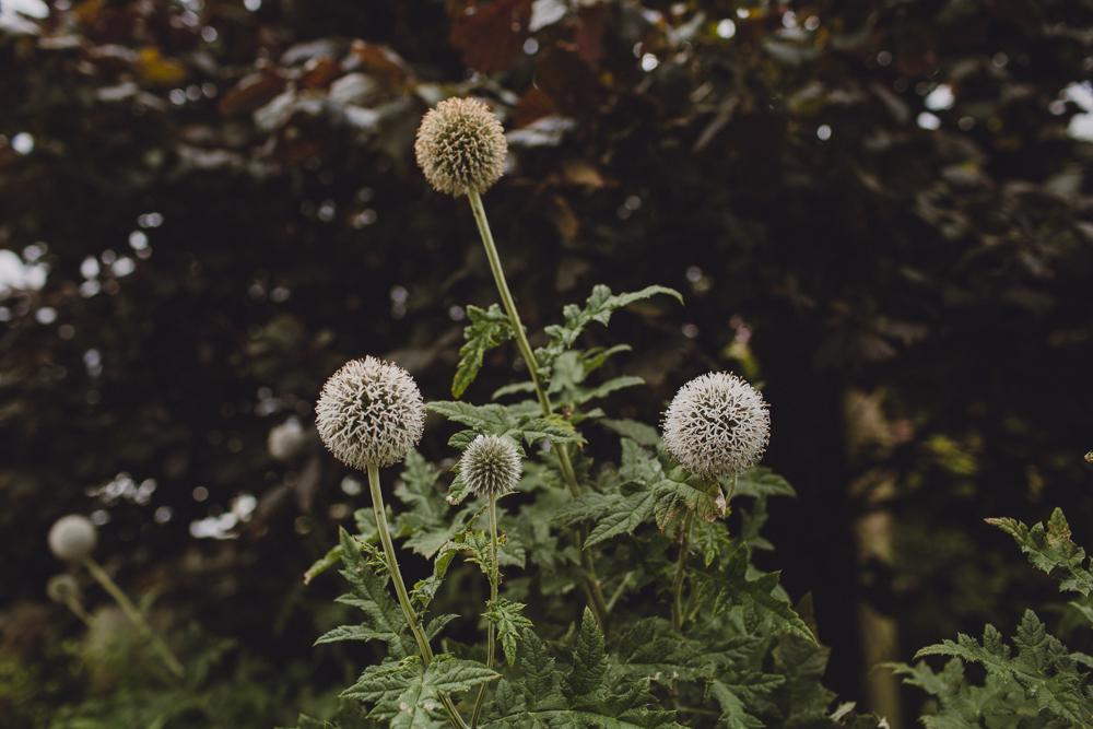julia-trotti_dublin-botanic_037.jpg
