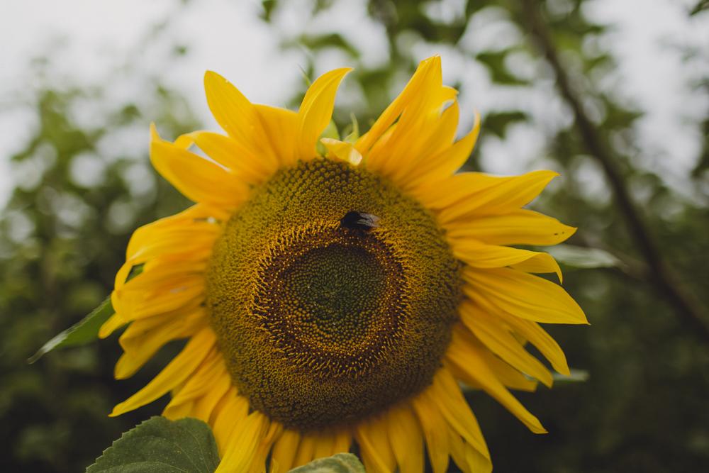 julia-trotti_dublin-botanic_047.jpg