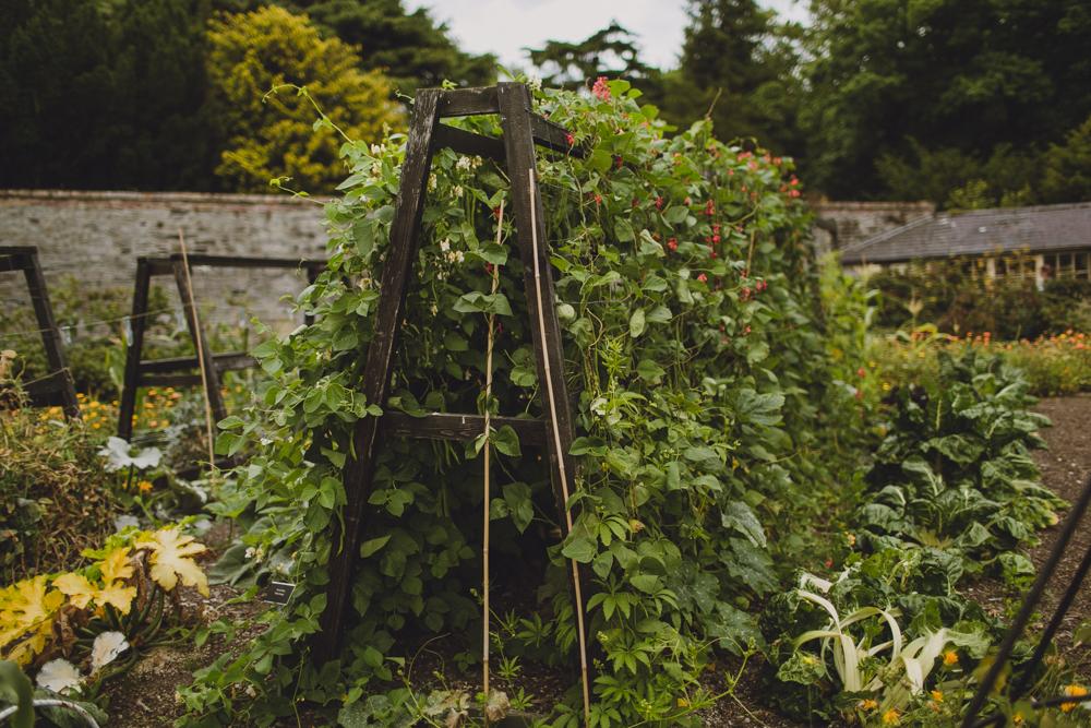 julia-trotti_dublin-botanic_049.jpg
