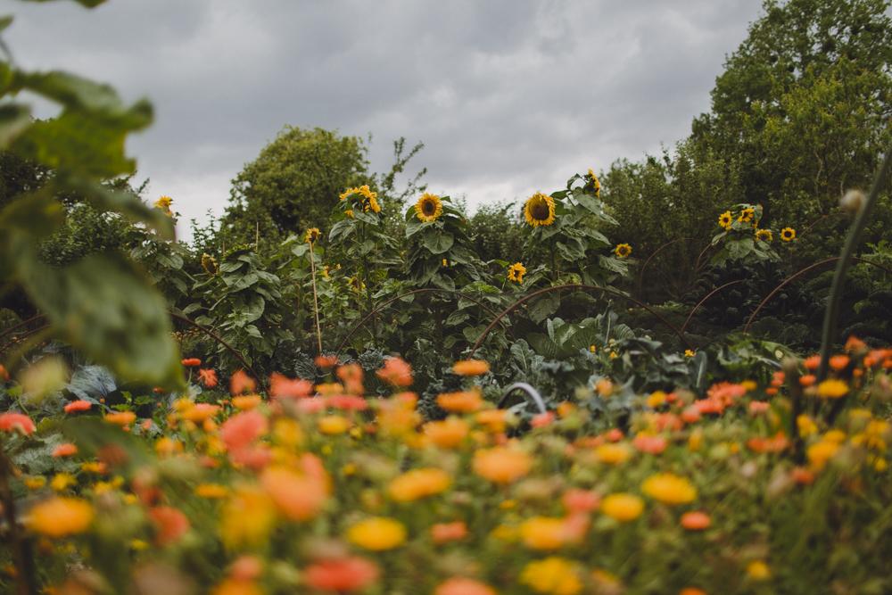 julia-trotti_dublin-botanic_050.jpg