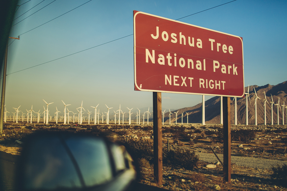 joshua tree_08.jpg