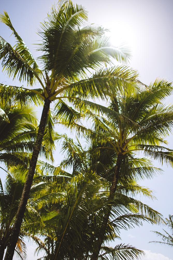 hawaii_005.jpg