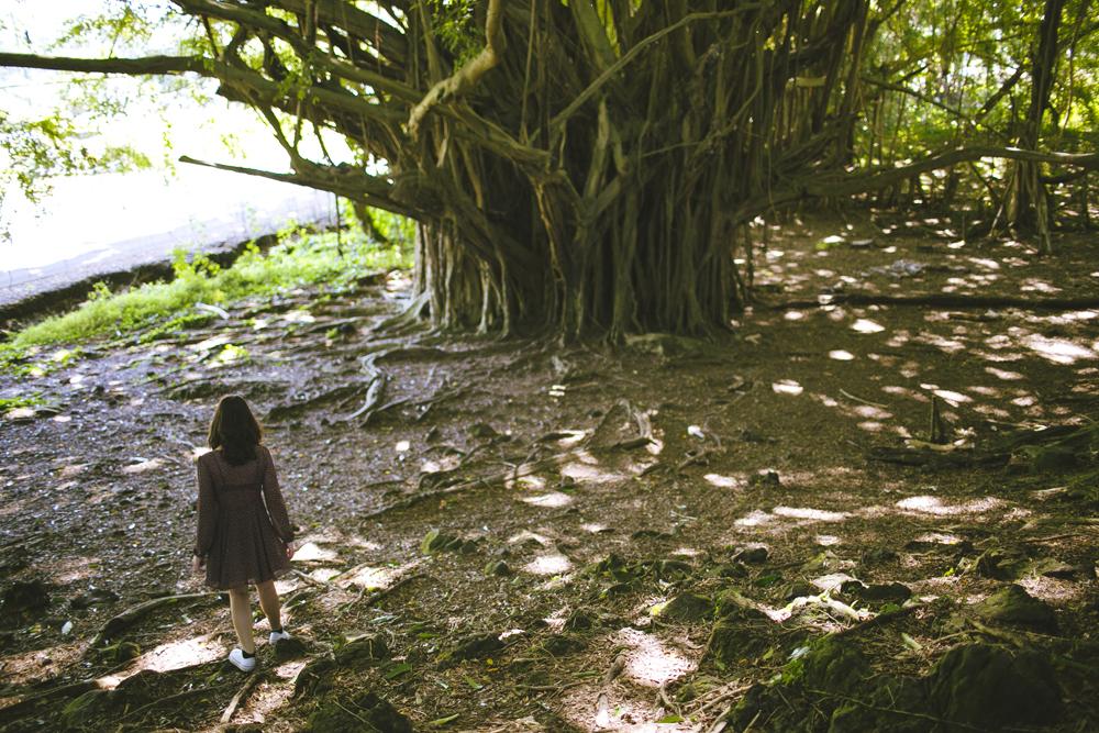 hawaii-waterfalls_014.jpg