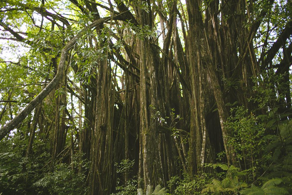 hawaii-waterfalls_028.jpg