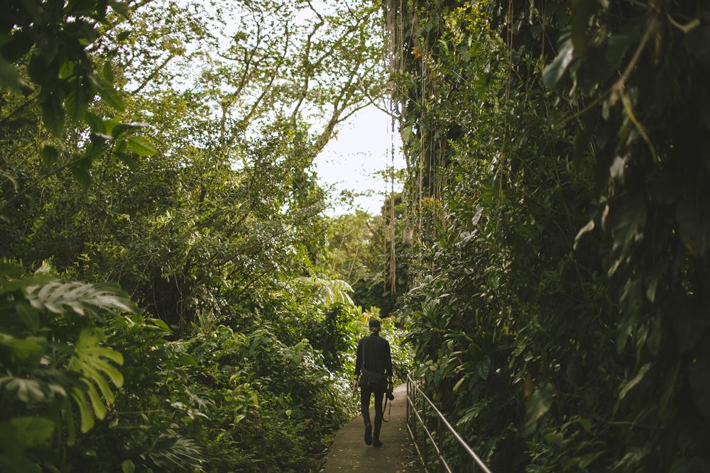 hawaii-waterfalls_033.jpg