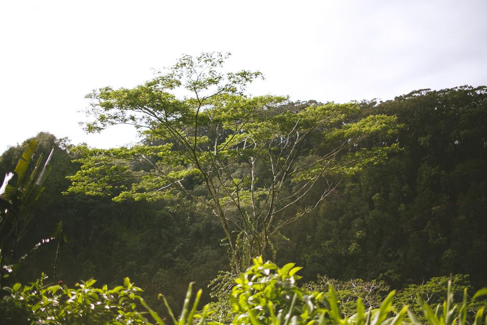 hawaii-waterfalls_035.jpg