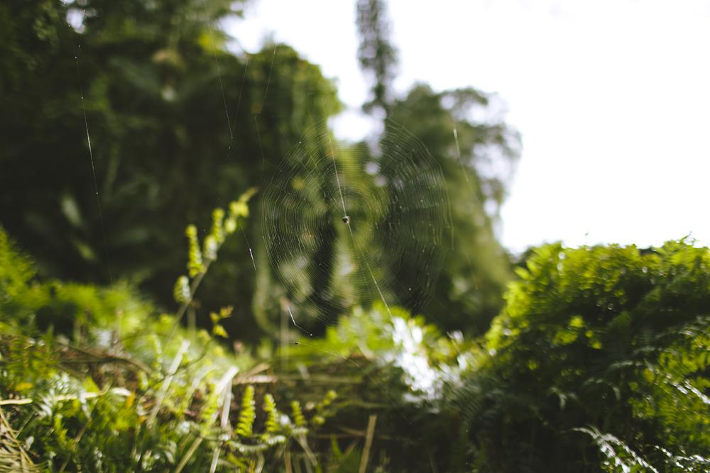 hawaii-waterfalls_039.jpg