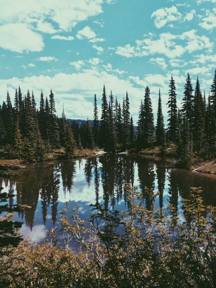 A reflective lake on our Lakes Trail in Mt Rainier.