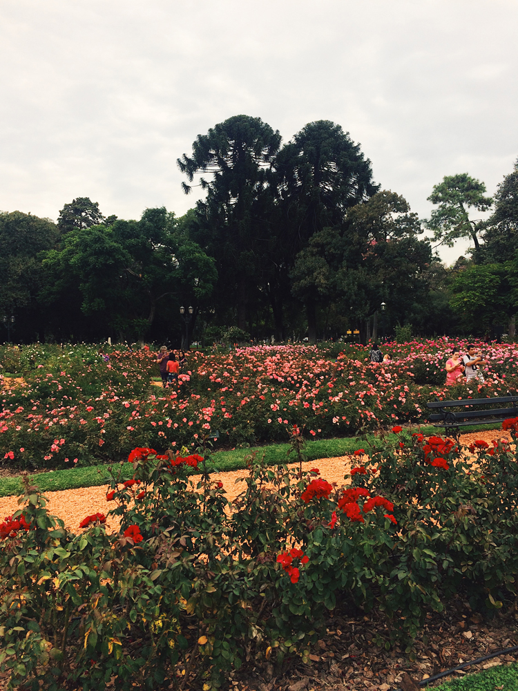 Visiting the rose gardens one busy Sunday afternoon in Palermo.