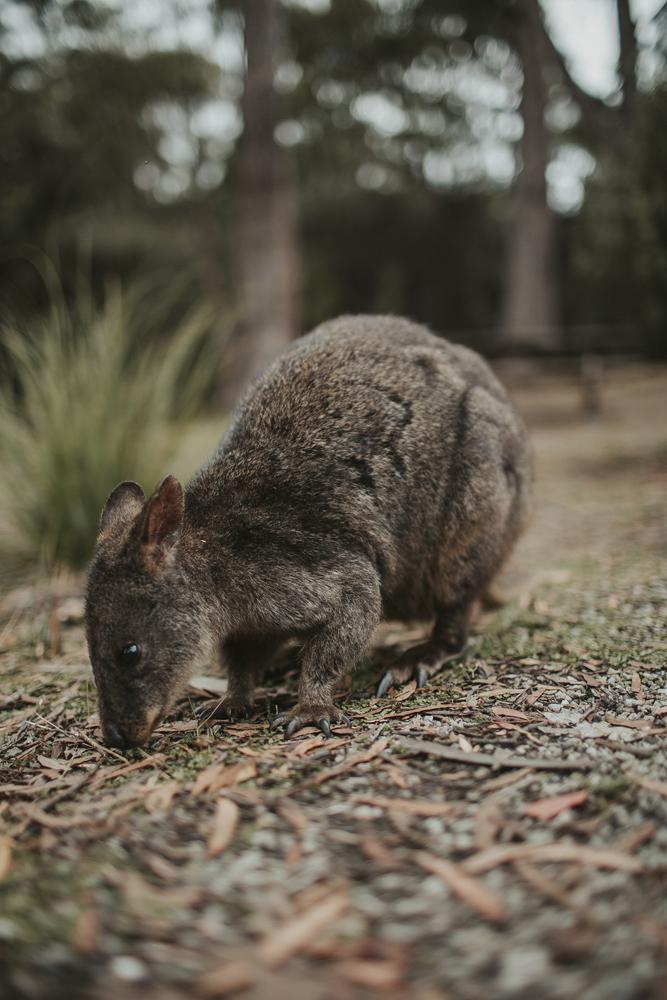 julia-trotti_tasmania_20.jpg