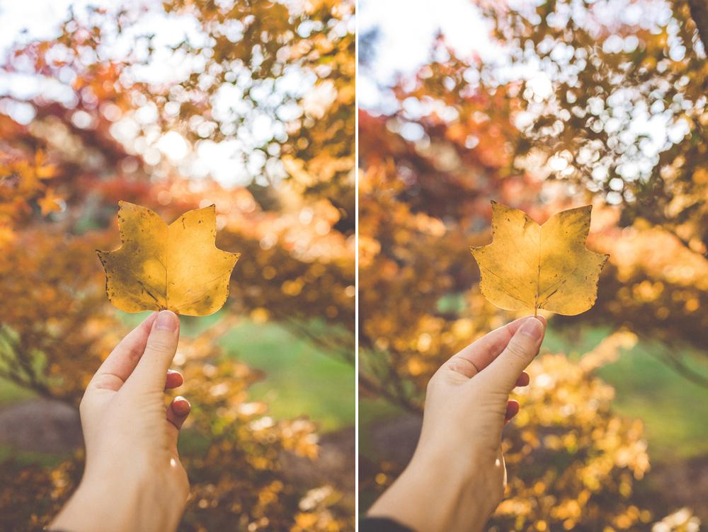 Left: 35mm mki / Right: 35mm mkii  Camera settings:  Shutter | 1/200  Aperture | f2.8  ISO | 200