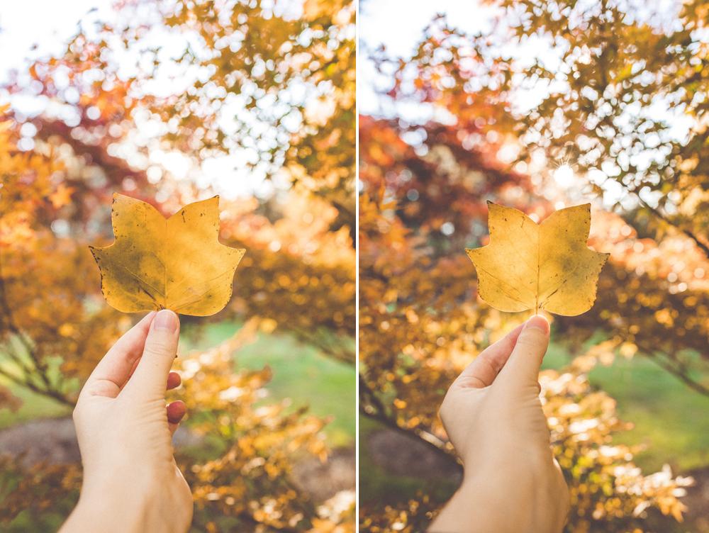 Left: 35mm mki / Right: 35mm mkii  Camera settings:  Shutter | 1/200  Aperture | f4  ISO | 500